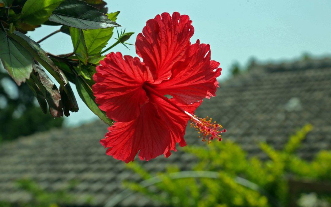 想在沖繩設立公司?流程和注意事項一次報給你!